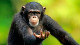 Des cargaisons de bananes destinées aux singes du Zoo d'Alger détournées vers un marché local